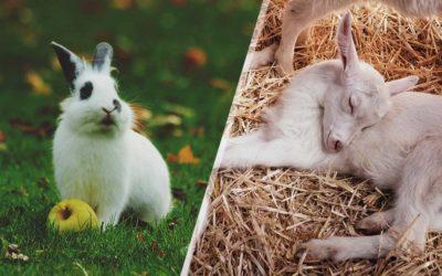 Cute Animals Born in Spring